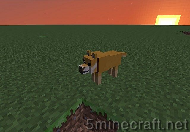Doge-client-2.jpg