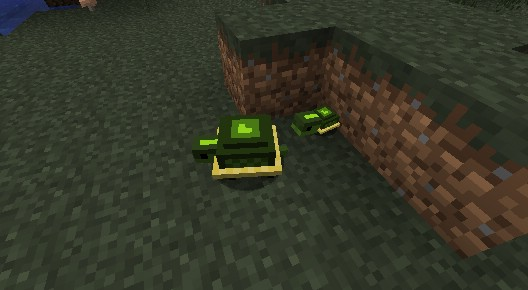 Pet-Turtles-Mod-6.jpg