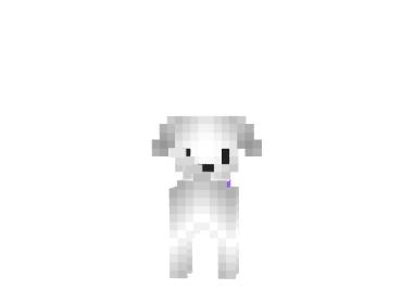 Maltese-dog-skin-1.png