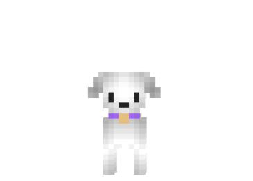 Maltese-dog-skin.png